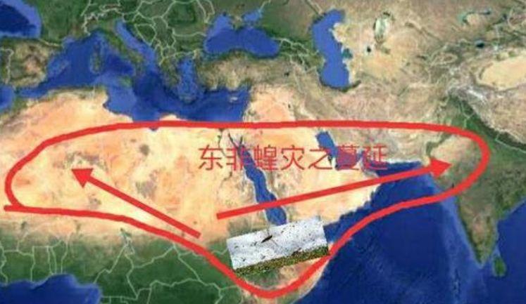 数千亿只蝗虫下一步会入侵中国吗?